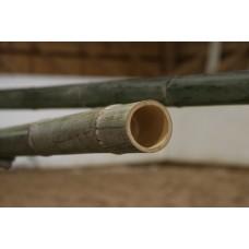 Bambubom
